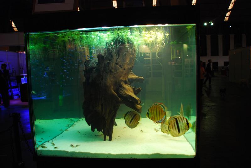 Barcelona Aquarium Meeting | Acuario Rosa