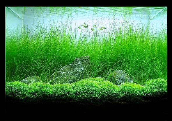 30cm meadow zephyr
