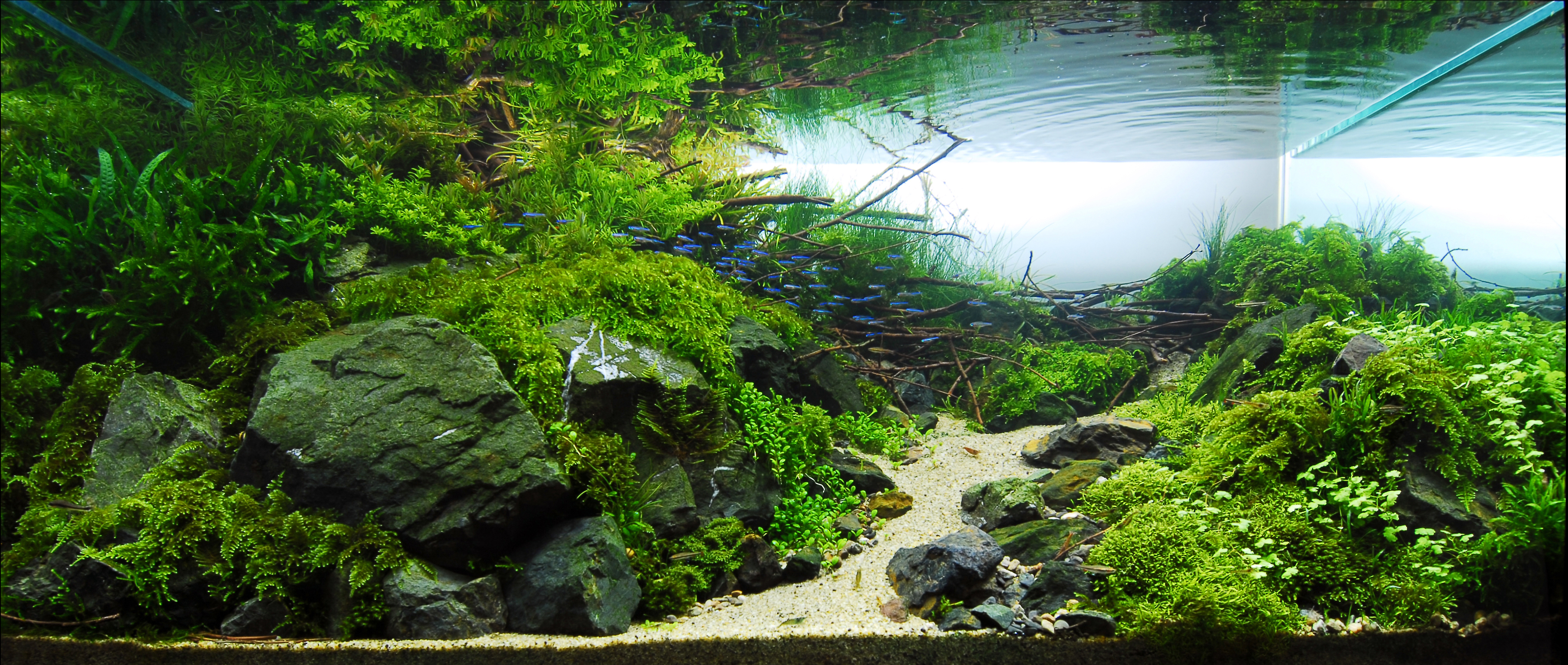 480l Und Was Machen Wir Jetzt Aquarienvorstellungen Aquascaping Aquarium