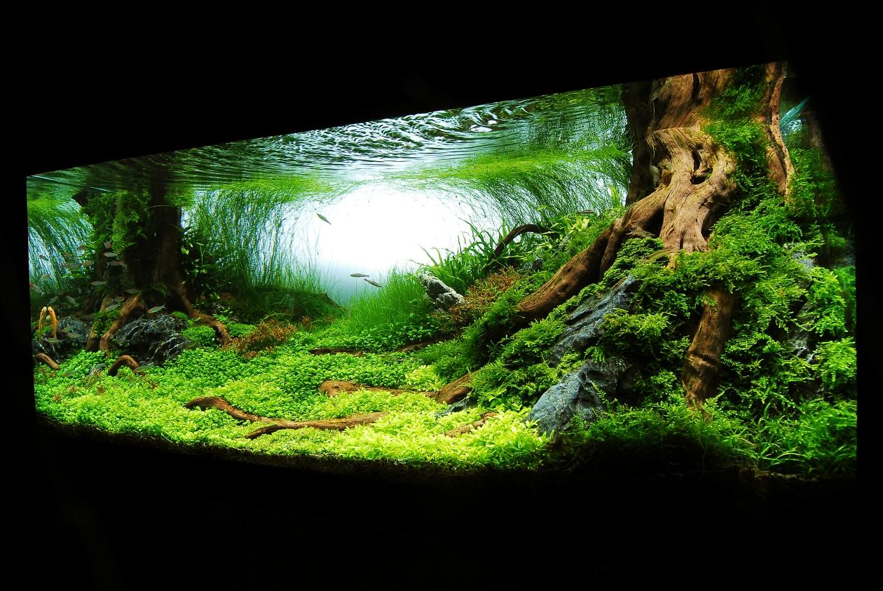 Лучшие дизайны аквариумов мира