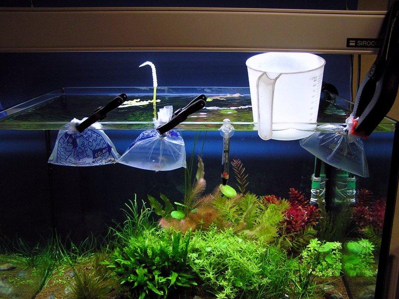 Gouda acuario rosa for Oxigeno de peceras