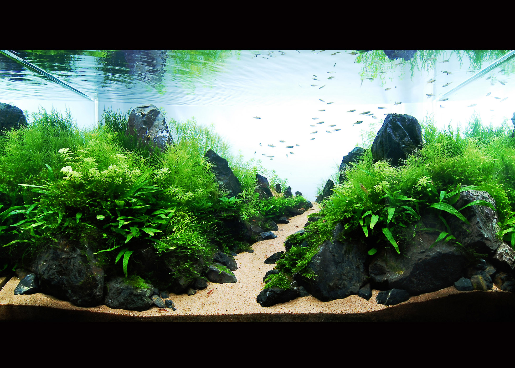 English acuario rosa for Design aquarium
