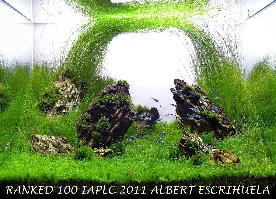 The International Aquatic Plants Layout Contest 2011 100
