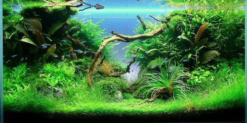 The International Aquatic Plants Layout Contest 2011 101