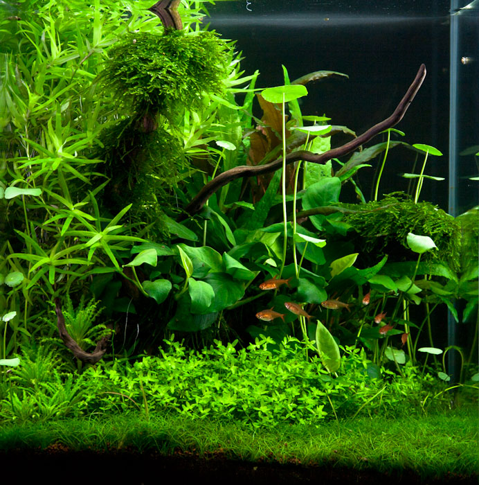The International Aquatic Plants Layout Contest 2011 1076