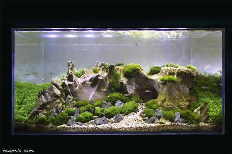 The International Aquatic Plants Layout Contest 2011 1119