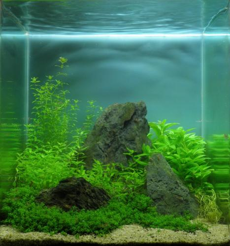 The International Aquatic Plants Layout Contest 2011 1142