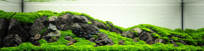 The International Aquatic Plants Layout Contest 2011 12