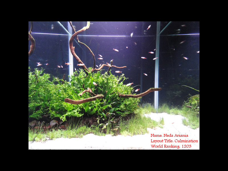 The International Aquatic Plants Layout Contest 2011 1203
