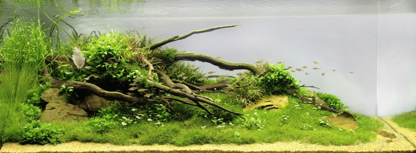 The International Aquatic Plants Layout Contest 2011 126