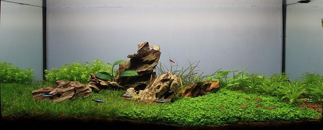 The International Aquatic Plants Layout Contest 2011 1286