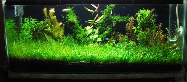 The International Aquatic Plants Layout Contest 2011 1297