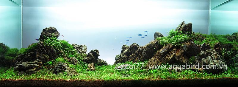The International Aquatic Plants Layout Contest 2011 131