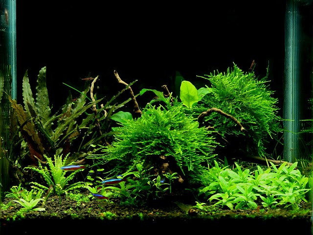 The International Aquatic Plants Layout Contest 2011 1465