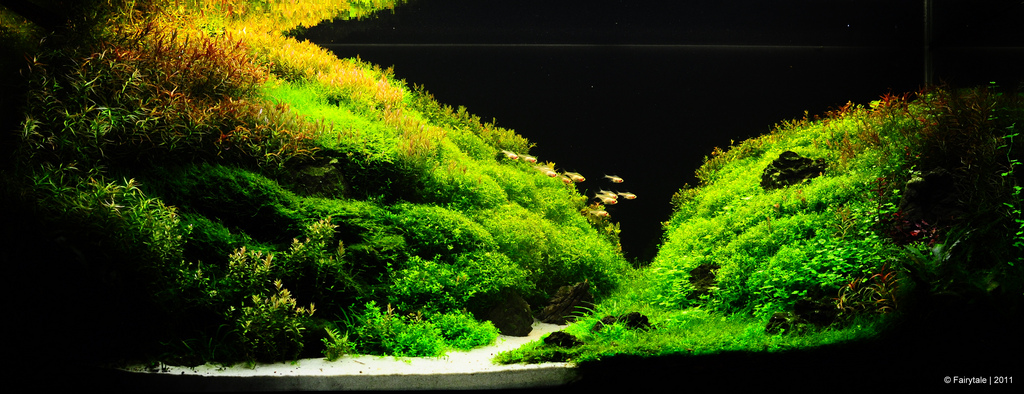 The International Aquatic Plants Layout Contest 2011 149
