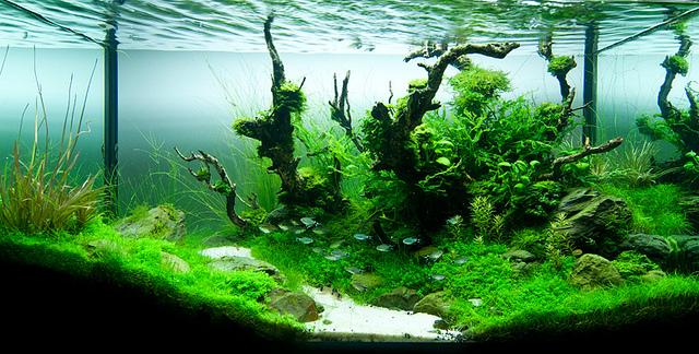 The International Aquatic Plants Layout Contest 2011 162