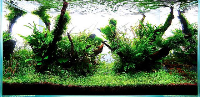The International Aquatic Plants Layout Contest 2011 167