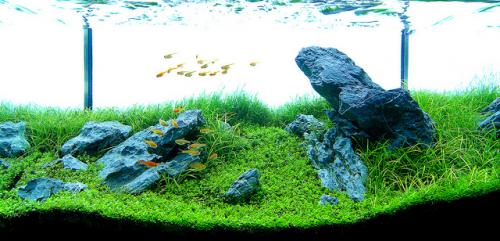 The International Aquatic Plants Layout Contest 2011 180