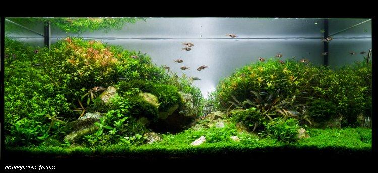 The International Aquatic Plants Layout Contest 2011 189