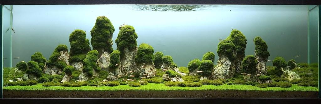The International Aquatic Plants Layout Contest 2011 22