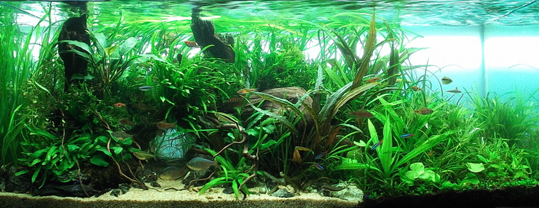 The International Aquatic Plants Layout Contest 2011 222