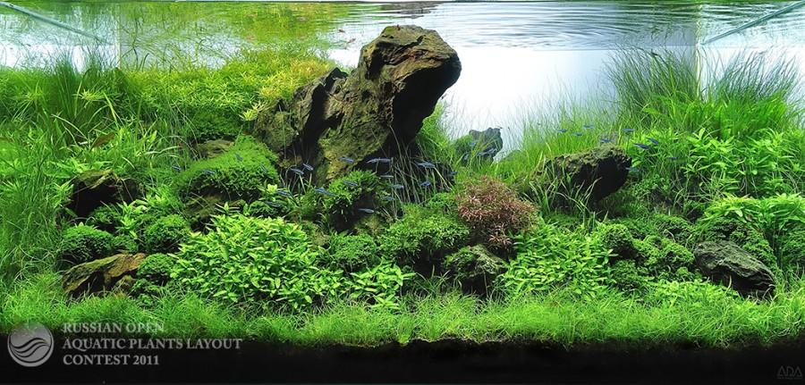 The International Aquatic Plants Layout Contest 2011 23