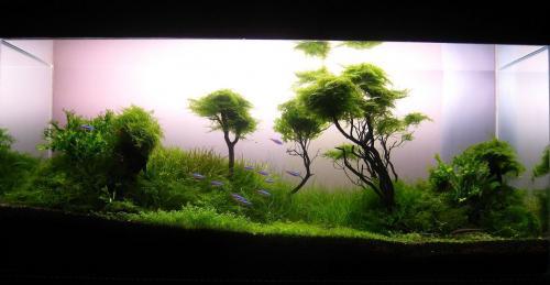 The International Aquatic Plants Layout Contest 2011 25