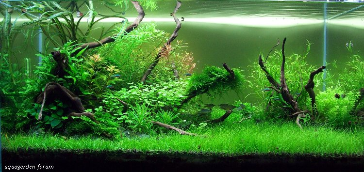 The International Aquatic Plants Layout Contest 2011 253