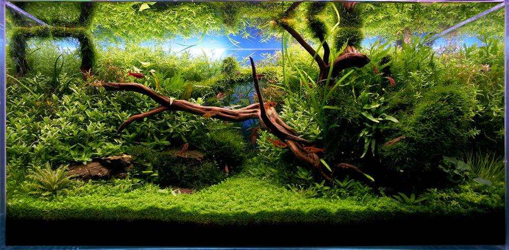 The International Aquatic Plants Layout Contest 2011 262