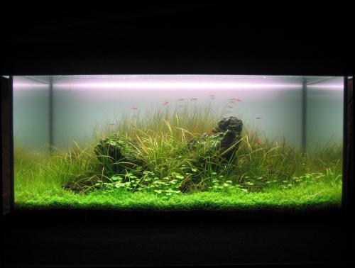 The International Aquatic Plants Layout Contest 2011 264