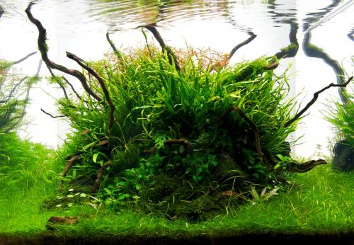 The International Aquatic Plants Layout Contest 2011 266