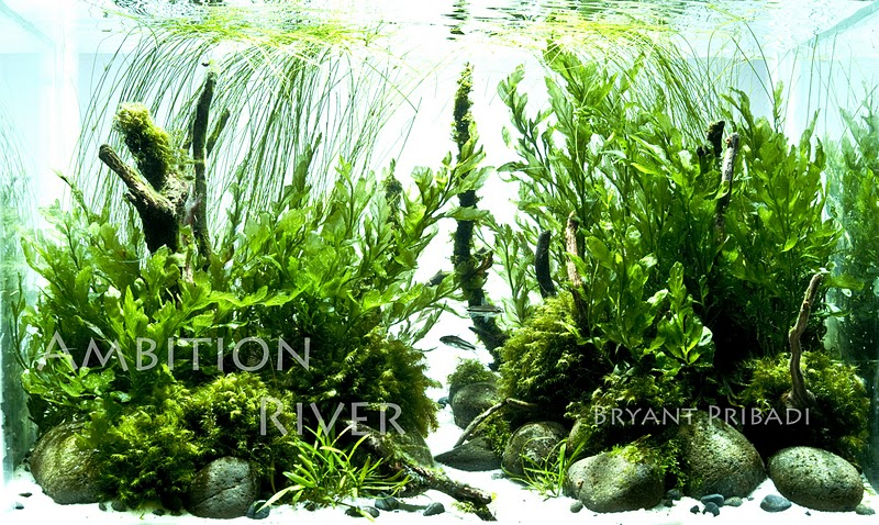 The International Aquatic Plants Layout Contest 2011 272