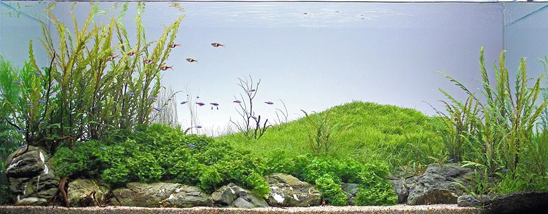 The International Aquatic Plants Layout Contest 2011 280