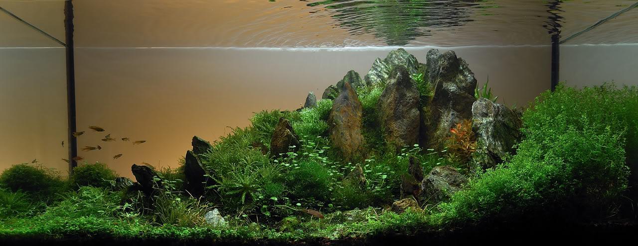 The International Aquatic Plants Layout Contest 2011 287