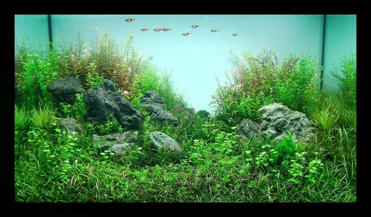 The International Aquatic Plants Layout Contest 2011 291