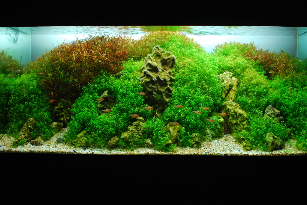 The International Aquatic Plants Layout Contest 2011 303