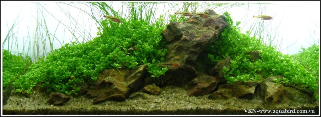 The International Aquatic Plants Layout Contest 2011 306