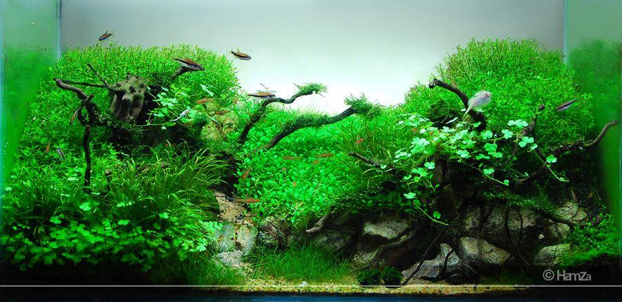 The International Aquatic Plants Layout Contest 2011 309
