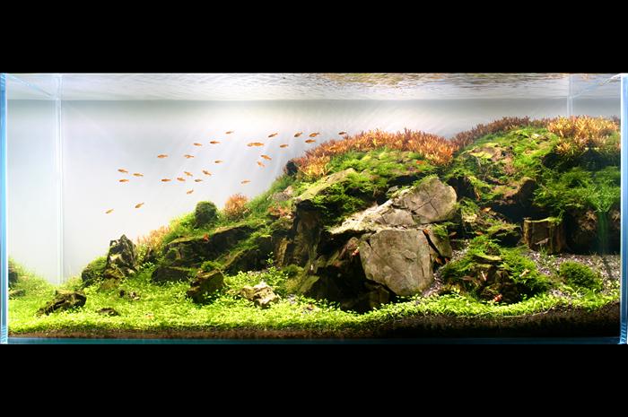 The International Aquatic Plants Layout Contest 2011 310