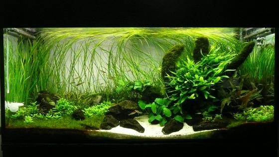 The International Aquatic Plants Layout Contest 2011 3241