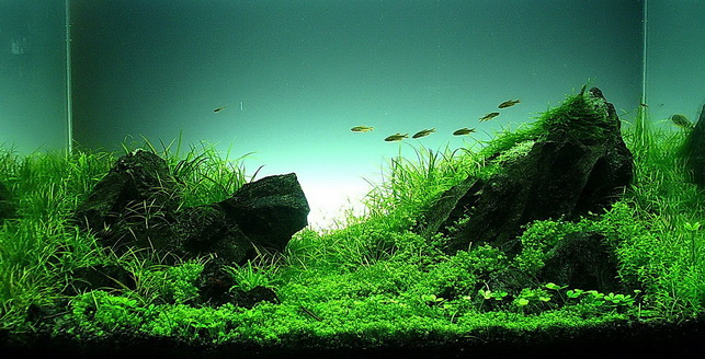 The International Aquatic Plants Layout Contest 2011 333