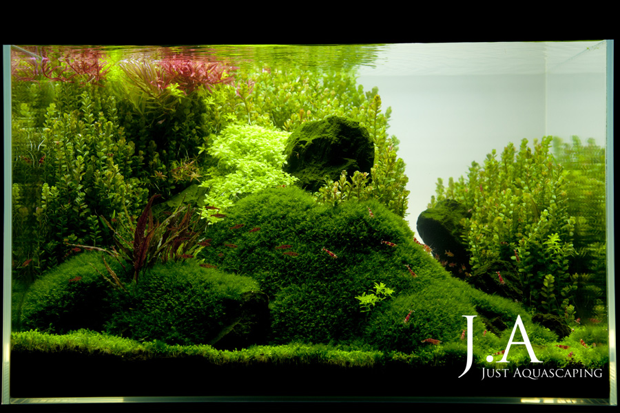 The International Aquatic Plants Layout Contest 2011 354