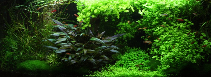 The International Aquatic Plants Layout Contest 2011 362