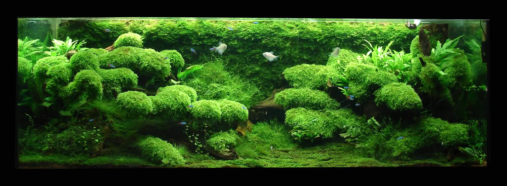 The International Aquatic Plants Layout Contest 2011 37