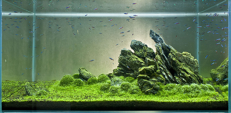 The International Aquatic Plants Layout Contest 2011 374