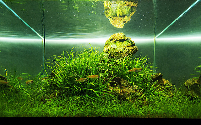 The International Aquatic Plants Layout Contest 2011 395