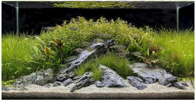 The International Aquatic Plants Layout Contest 2011 409