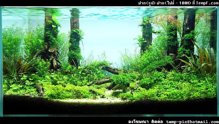 The International Aquatic Plants Layout Contest 2011 45
