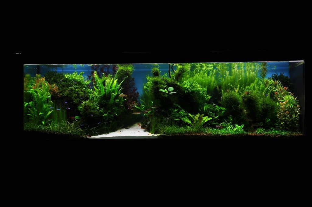 The International Aquatic Plants Layout Contest 2011 450