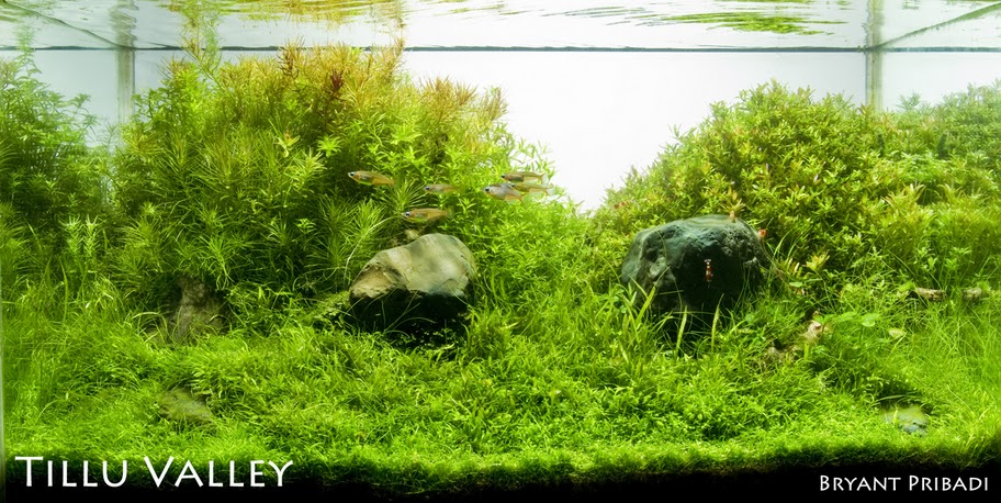 The International Aquatic Plants Layout Contest 2011 503